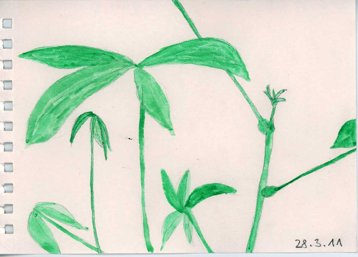 Be Creative #87 - Paci grows sprouts, © Ines Häufler 2011
