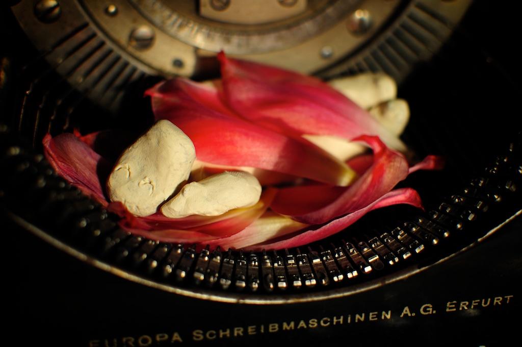 Be Creative #132 - Tulip Petals, © Ines Häufler, 2011