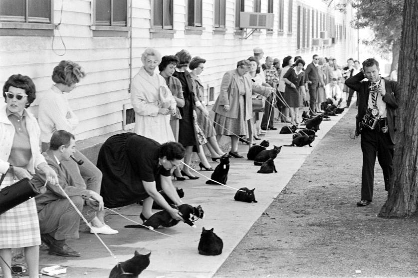 Ralph Crane: Black cats auditioning for a role in The Black Cat